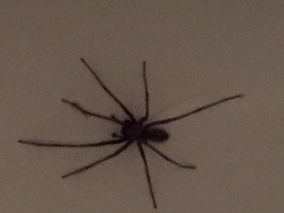 Bange for edderkopper - det kan der gøres noget ved